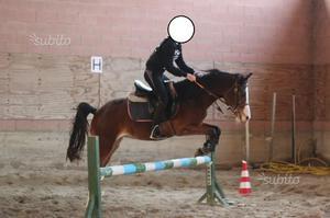 Pony Femmina 6 anni