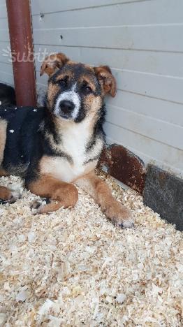 Cucciola di 5 mesi in adozione
