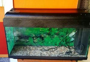 Sfondo per acquario posot class for Acquario tartarughe prezzo