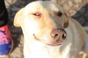 Adozione del cuore per cane di 3 anni-epilettico