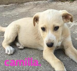 Camilla.soli 2 mesi e mezzo.in adozione.tg media