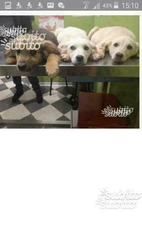 Cuccioli meticci