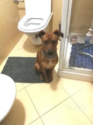 Regalo dolcissimo cagnolino di 1 anno