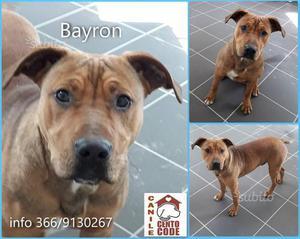 Bayron: simpaticissimo cucciolo di circa 6 mesi
