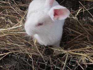 Conigli allevati in casa