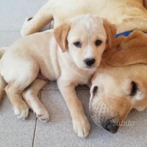 Regalo 5 cuccioli 2 maschi e 3 femmine