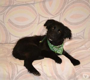 Ozzy,cucciolo di 5 mesi
