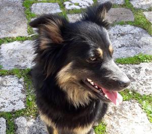 CANDY, bellissima cagnolina cerca adozione