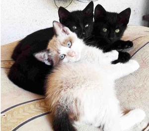 Regalo tre gattini di due mesi