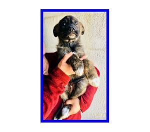 REMY piccolo cucciolo 3 mesi già in canile
