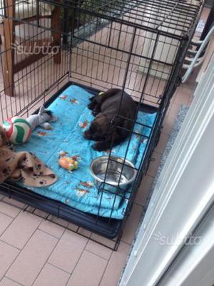Gabbia box per cani e gatti