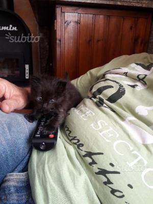 Gattini meravigliosi in regalo