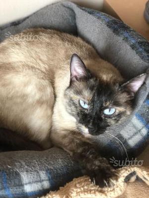 Katty, 5 anni, sterilizzata, femmina