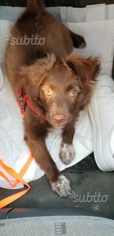 Cucciola cane taglia media contenuta