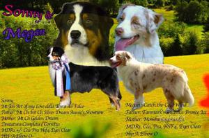 Cuccioli di Australian Shepherd (Pastore Australia