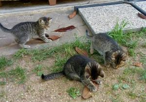 Gattini bisognosi di affetto