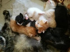 Gattini stupendi a pelo lungo