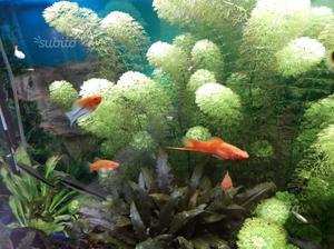Piante pesci acquario posot class for Pesci e acquario