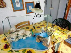 Tartarughiera completa posot class for Depuratore acqua tartarughe