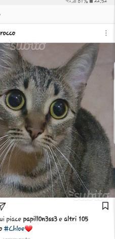 Cloe gatta