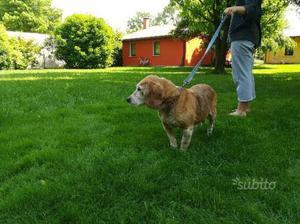 Regalo beagle