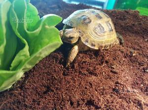 Tartarughe 2 grandi posot class for Vasca per tartarughe grandi