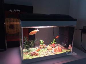 Acquario vitakraft acquario hawaii vision posot class for Acquario 300 litri prezzo