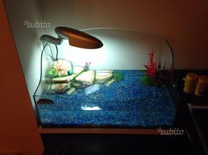 Isolotto per tartarughe galleggiante e posot class for Acquario per tartarughe piccole