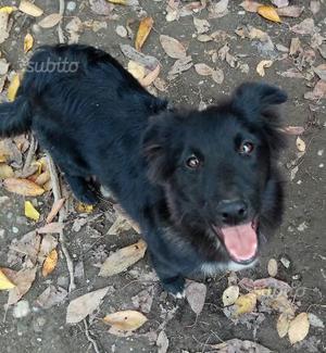 Amber - Cane meticcio di 1 anno dolcissima