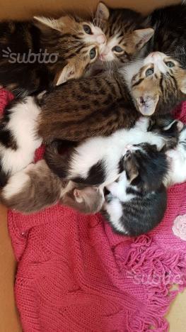 Regalo gattini e anche le mamme