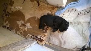 Regalo magnifico cucciolo
