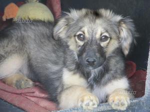 Tenera cucciola di tre mesi in adozione tg m/picco