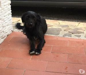 BONNIE dolcissima cagnolina di 10 kg