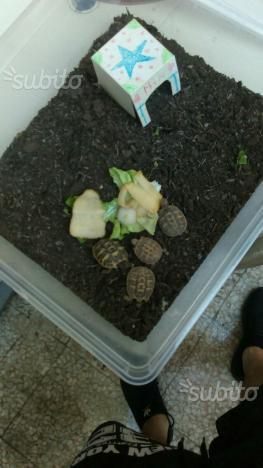 4 tartarughe piccole posot class for Tartarughiera per tartarughe grandi