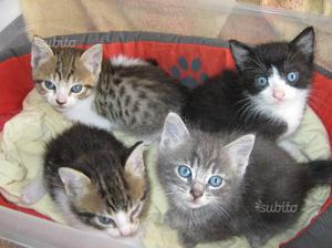 Quattro meravigliosi gattini