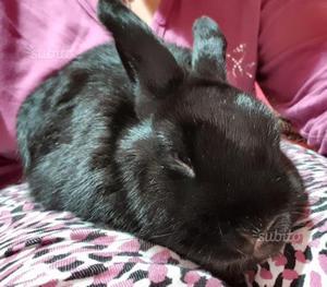 Regalo coniglio maschio