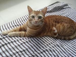 Regalo gatto maschio