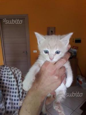 Gattino in adozione