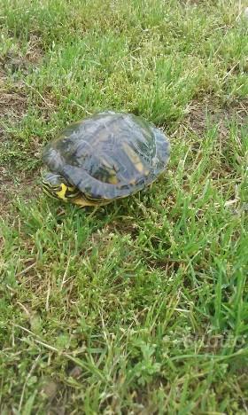 Isolotto per tartarughe galleggiante e posot class for Depuratore acqua tartarughe