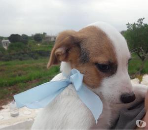 Piccolo cucciolo di tre mesi cerca casa