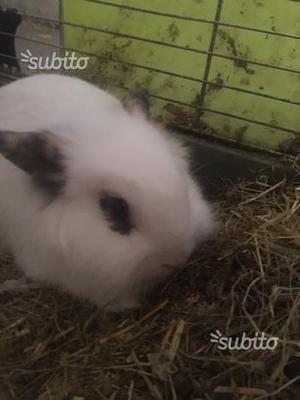 Coniglietta (BIANCA E NERA DI NOMEPallina)