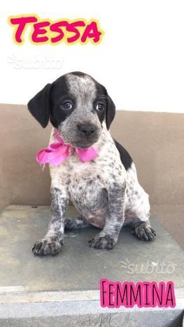Cucciola simil beagle in ADOZIONE