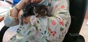 Gattini disponibili dal 10 di giugno