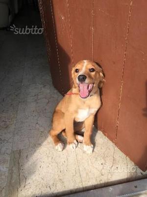 Lena cucciola 2 mesi e mezzo in adozione