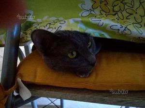 Regalo gattina di 1anno