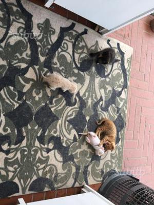 Gatti in REGALO