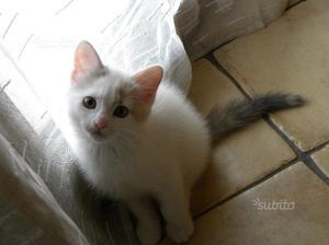 Gattina 2 mesi