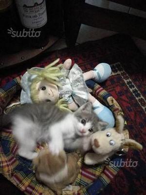 Gattina di 1 mese regalo