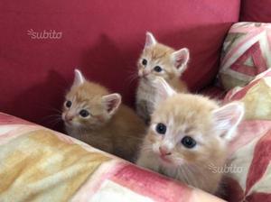 Gattini Rossi in regalo