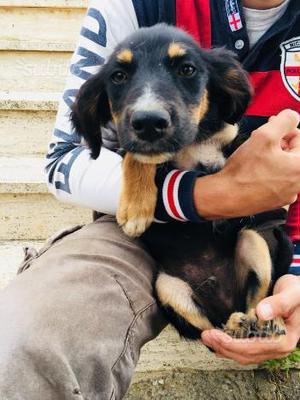 Lino, cucciolo 3 mesi affettuoso dolce